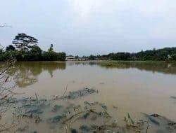 Akibat Terendam Banjir Sawah di Kampung Sentral Tak Produktif, Pemkab Lebak Diminta Berikan Solusi