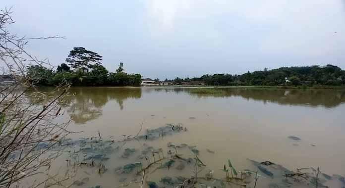 Terendam Banjir Sawah di Kampung Sentral Tak Produktif, Pemkab Lebak Diminta Berikan Solusi