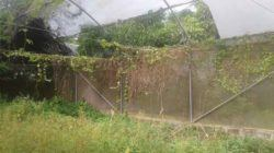 Tampak Angker Demplot Agribisnis Pertanian Green House DKPP Kota Cilegon Rusak Tak Terawat